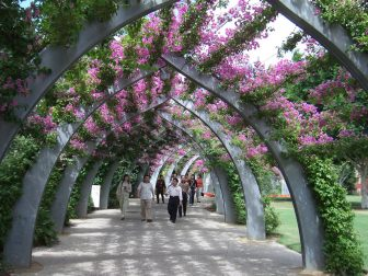 In Brisbane, the Southbank gardens arching overhead, with green leaves and pink flowers all over the arched lattice. Southbank has a wide range of activities for the school holidays.