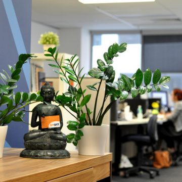 Future Office: Do plants increase workplace productivity? feature image