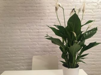 A peace lily sits on a white table inside. There is a white brick wall and a white chair in the background. The lily looks like it could be an office plants.