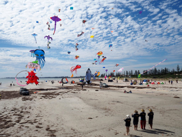 Semaphore beach, a dog friendly beach in adelaide, during the sempahore kite festival, where thousands of incredible kites are flown through the sky