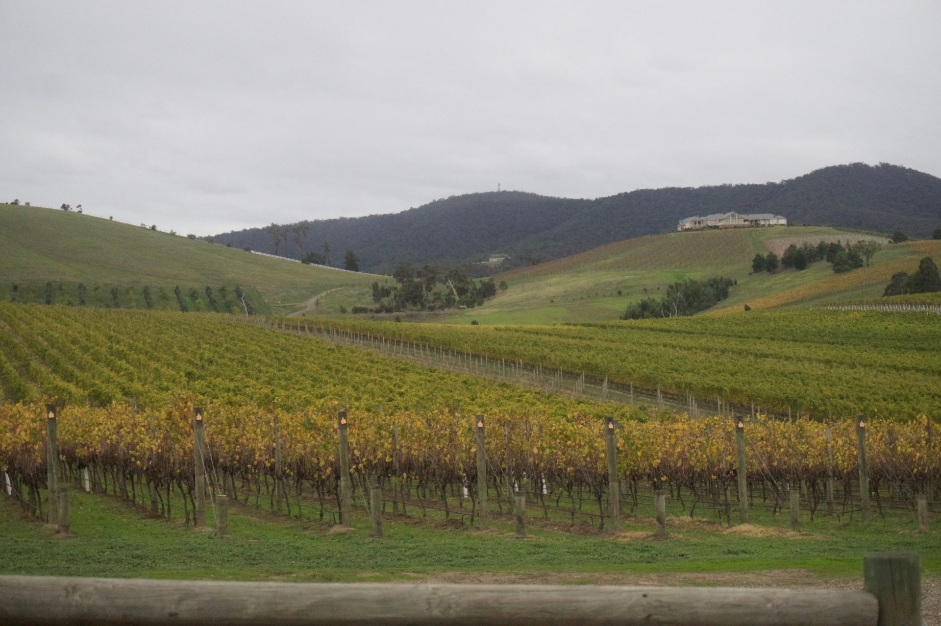 The view over the Trattoria d'Soumah Winery in the Yarra Valley, seen from the italian resturant - a great place for lunch when visiting Yarra Valley Wineries