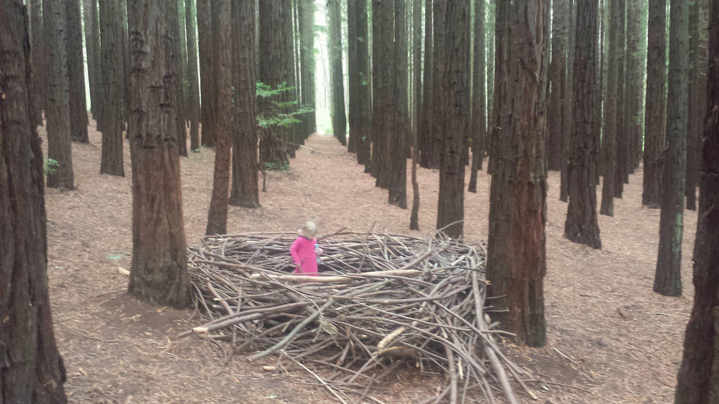 The mysterious branch art of David Digapony in East Warburton Redwood Forest