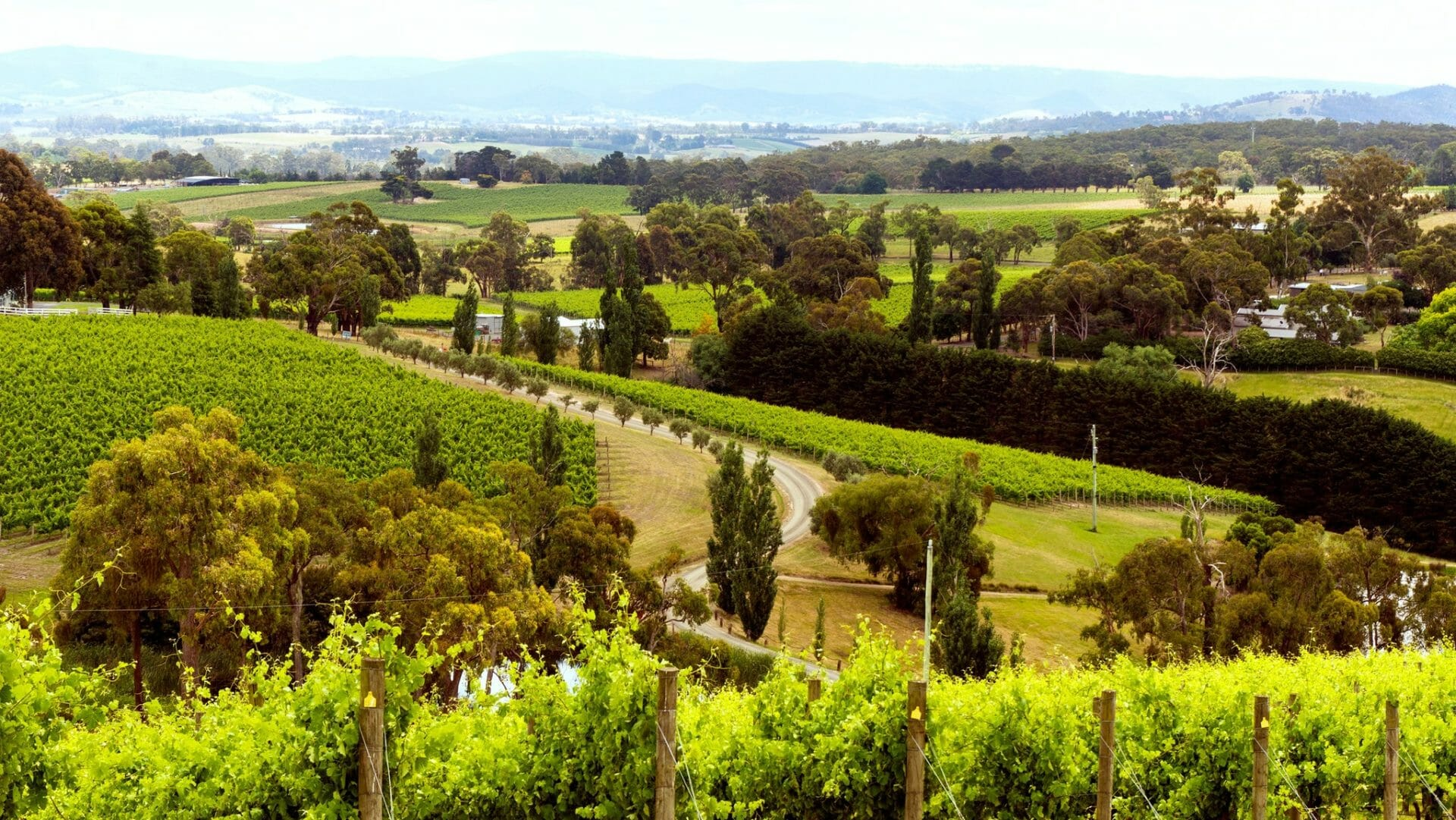 best wineries in melbourne