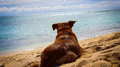 Dog Friendly Beaches: Ultimate Guide to Sydney, Melbourne & Brisbane
